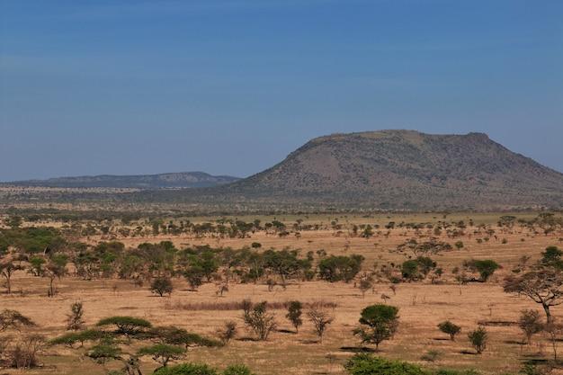 Safari au kenya et en tanzanie, afrique