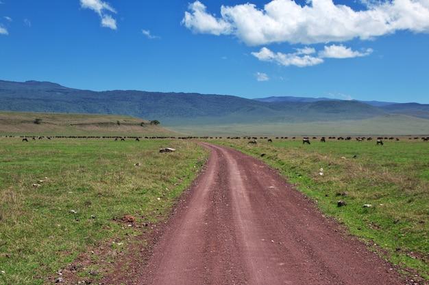 Safari au kenya et en tanzanie, en afrique