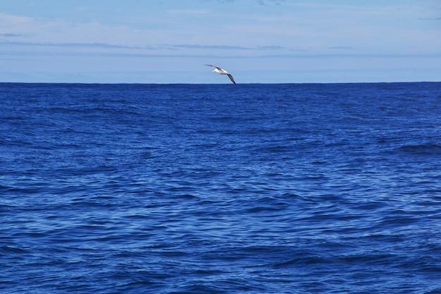 Safari aux baleines à kaikoura, nouvelle-zélande