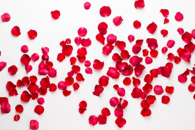 Saint valentin pétales de fleurs de rose sur fond blanc