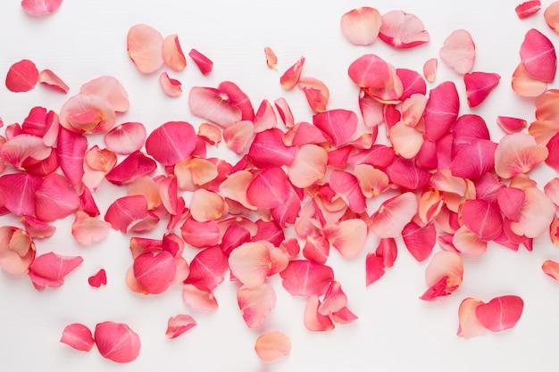 La saint-valentin. pétales de fleurs roses sur fond blanc. contexte de la saint-valentin. mise à plat, vue de dessus, espace de copie.