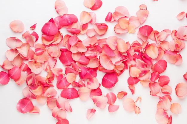 Saint valentin pétales de fleurs roses isolés