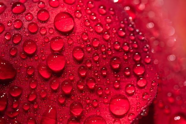 Saint valentin, pétales de roses, pluie, amour pour février