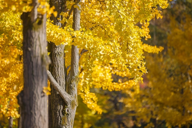 Saison d'automne au japon