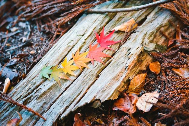 Saison d'automne coloré d'arbres et de feuilles