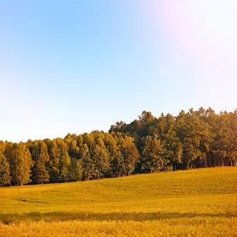 Saison de l'automne.