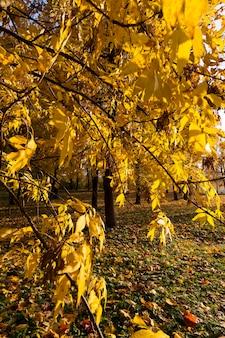 Saison De L'automne Photo Premium