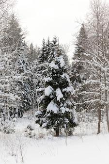 Saison d'hiver de l'année dans la forêt