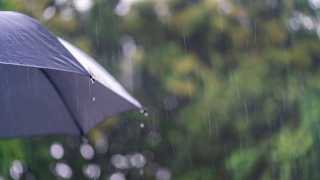 Saison des pluies avec parapluie noir