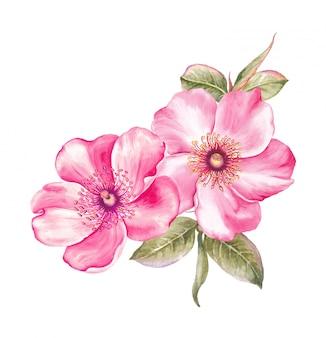 Sakura à l'aquarelle