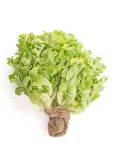 Salade de feuilles de chêne frais