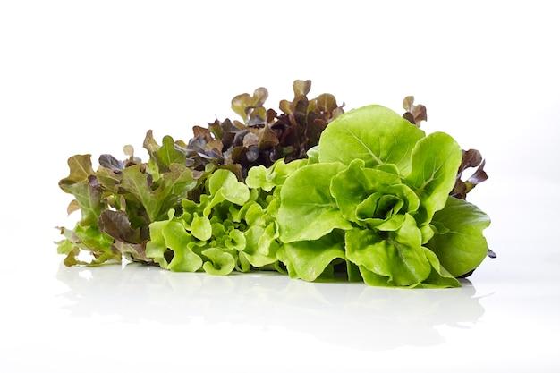 Salade hydroponique sur fond blanc