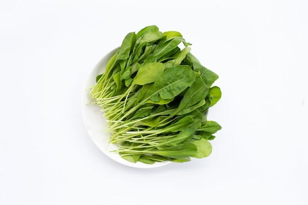 Salade de roquette verte fraîche sur fond blanc.