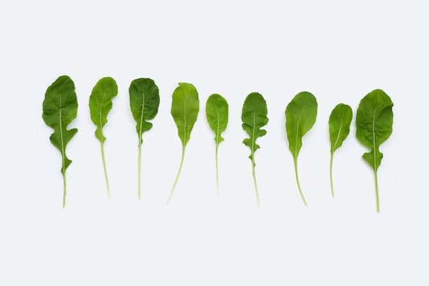 Salade de roquette verte fraîche sur une surface blanche.