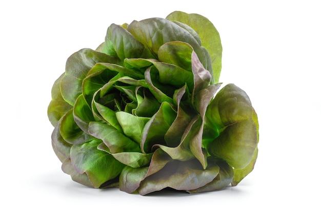 Salade verte fraîche isolée