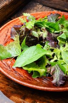 Salade verte saine