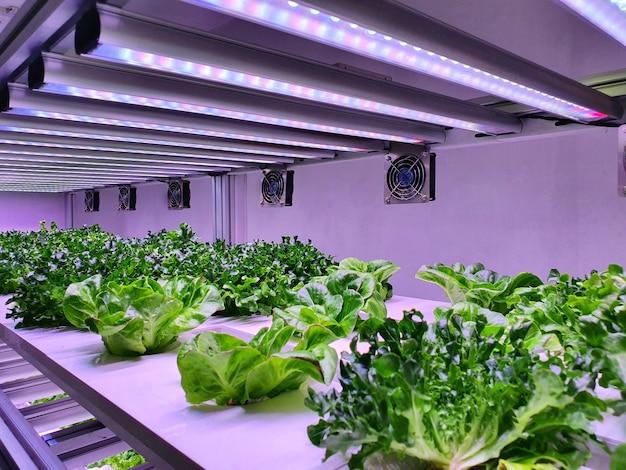 Salle spéciale équipée pour cultiver des plantes dans de bonnes conditions