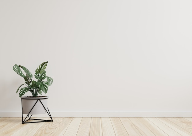 Salle vide murs blancs avec de belles plantes sur le côté sur le sol.