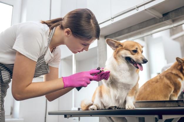 Salon de toilettage. toiletteuse d'animaux travaillant à asalon et à la recherche de participation