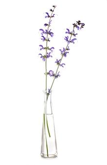 Salvia en éprouvette