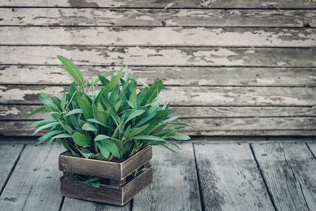 Salvia officinalis. feuilles de sauge sur une vieille table en bois. sauge du jardin. boîte en bois rustique et dentelle faite à la main. photo de magazine rétro. espace de copie.