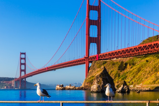 San francisco golden gate bridge mouette californie