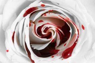 Le sang a augmenté macro image
