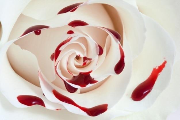Sang rose macro