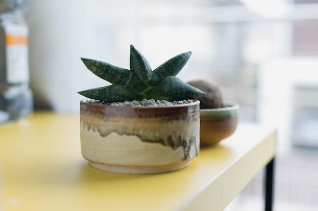 Sansevieria boncellensis en pot en céramique