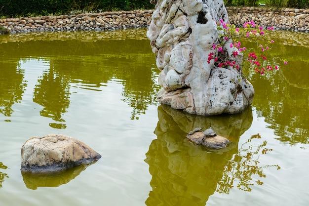 Sanya, hainan, chine - 20 février 2020 : l'étang vert avec tortues, végétation tropicale verte et grosses pierres sur le territoire du centre bouddhiste nanshan.
