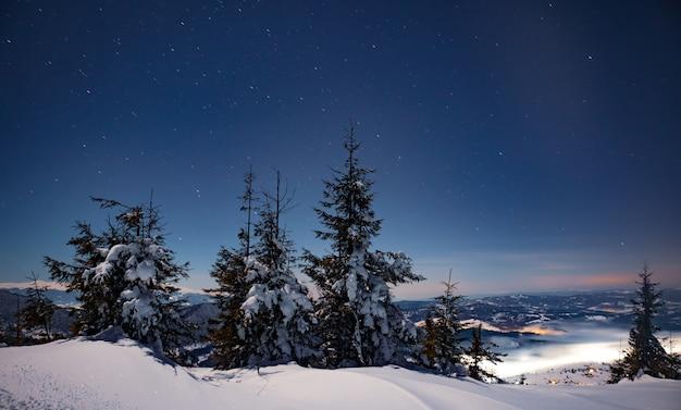 Des sapins enneigés de paysages nocturnes fascinants poussent parmi les congères. concept de beauté de la nature nordique. concept des aurores boréales