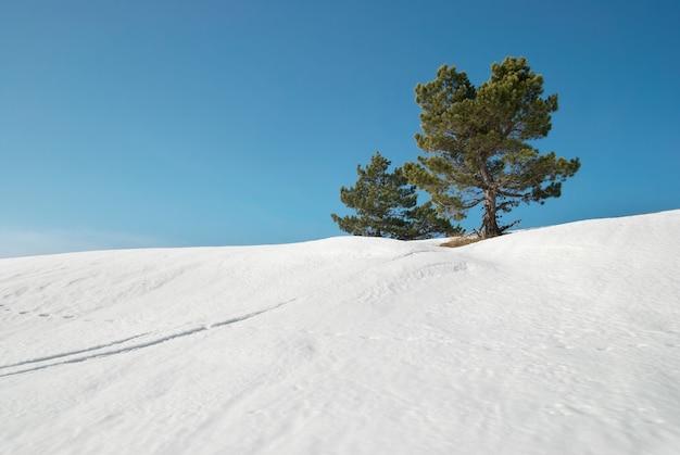 Sapins verts dans les montagnes enneigées