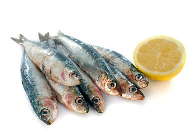 Sardine fraîche