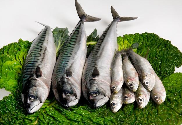 Sardines et maquereau sur un légume-feuille