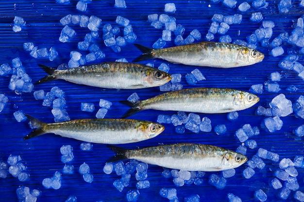 Sardines poissons frais sur glace