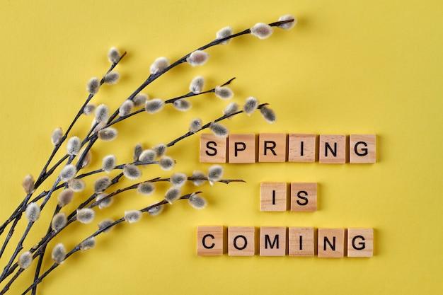 Saule de chatte sur fond jaune. le printemps arrive.