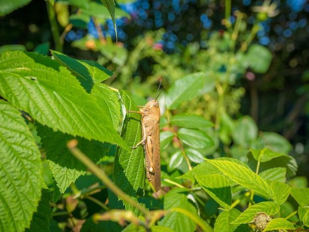 Sauterelle sur une plante aux feuilles vertes