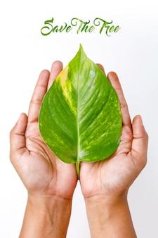 Sauver arbre concept feuille verte sur la main