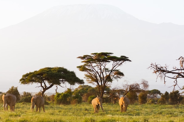 Savane d'amboseli au kenya avec des animaux