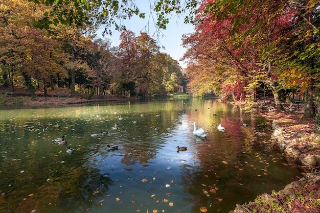 Scène d'automne au bord du lac du parco di monza