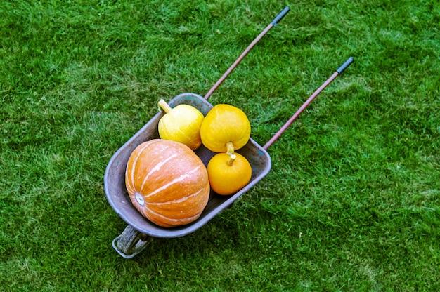 Scène d'automne avec des citrouilles dans le jardin