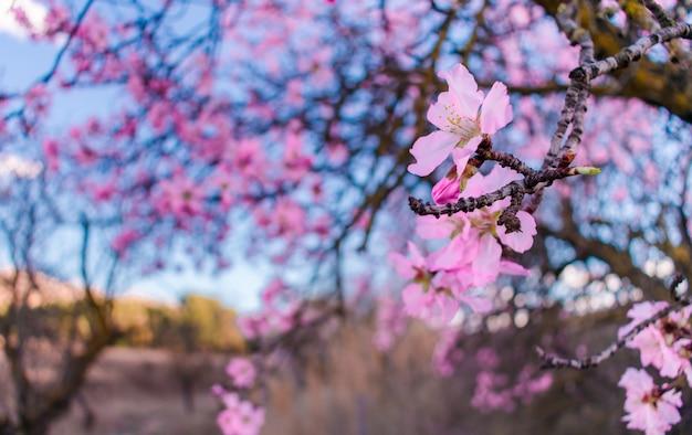 Scène de la belle nature avec arbre en fleurs