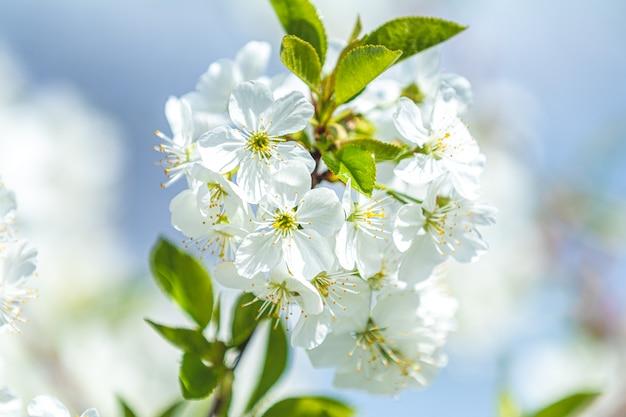 Scène de la belle nature avec la floraison des arbres et du soleil