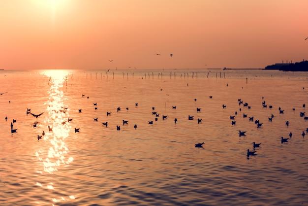Scène de coucher de soleil avec paysage de mouettes