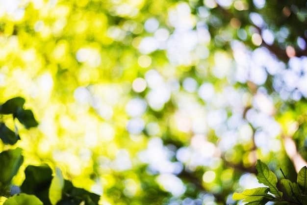 Scène défocalisée de feuillage frais et de ciel bleu, idéal comme arrière-plan de nature avec des couleurs vives et éclatantes