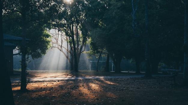 Scène du matin au parc national de khao yai, thaïlande