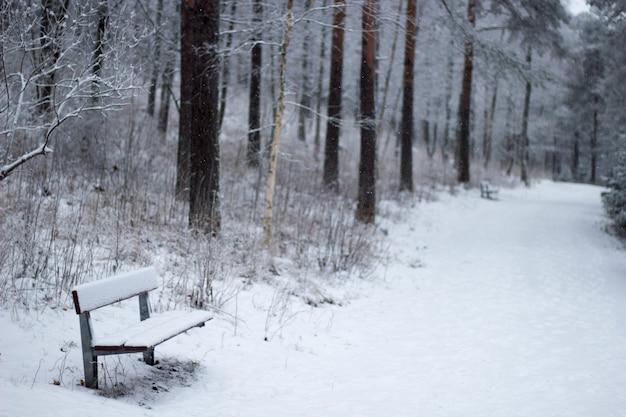 Scène d'hiver dans un parc avec bancs enneigés et chemin bordé d'arbres