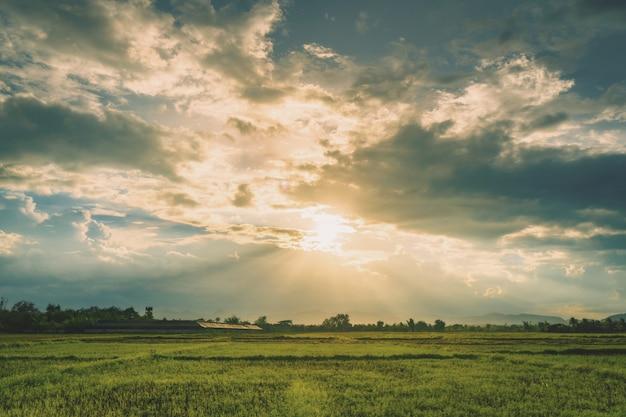 Scène naturelle ciel nuages et champ coucher de soleil agricole