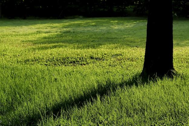 Scène de parc en été avec arbre et pré vert. ciel bleu et pré ensoleillé.