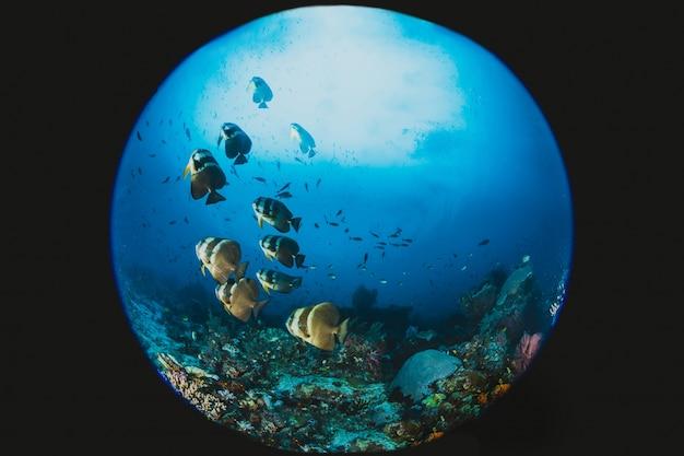 Scène de réservoir de poissons dans l'océan réel